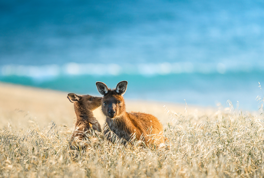 Cape Willoughby, Kangaroo Island