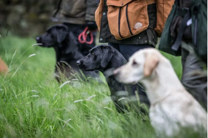 how FotoWare helps the Kennel club dog photographer of the year competition