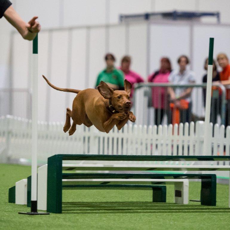 Discover Dogs 2016, Yulia Titovets / The Kennel Club ©