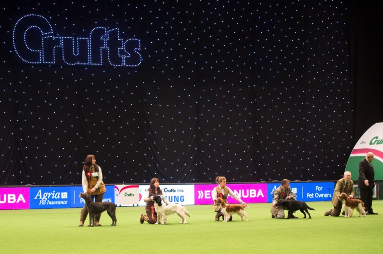 Crufts 2016, Yulia Titovets / The Kennel Club ©